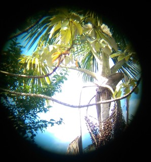 Macaw via binoculars